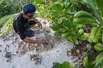 V bezpečí chráněné pláže se můžou želvy v klidu vylíhnout.