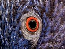 8. Čí jsou to oči? a) lori mnohobarevný zelenopáskový b) kakadu bílý c) andulka