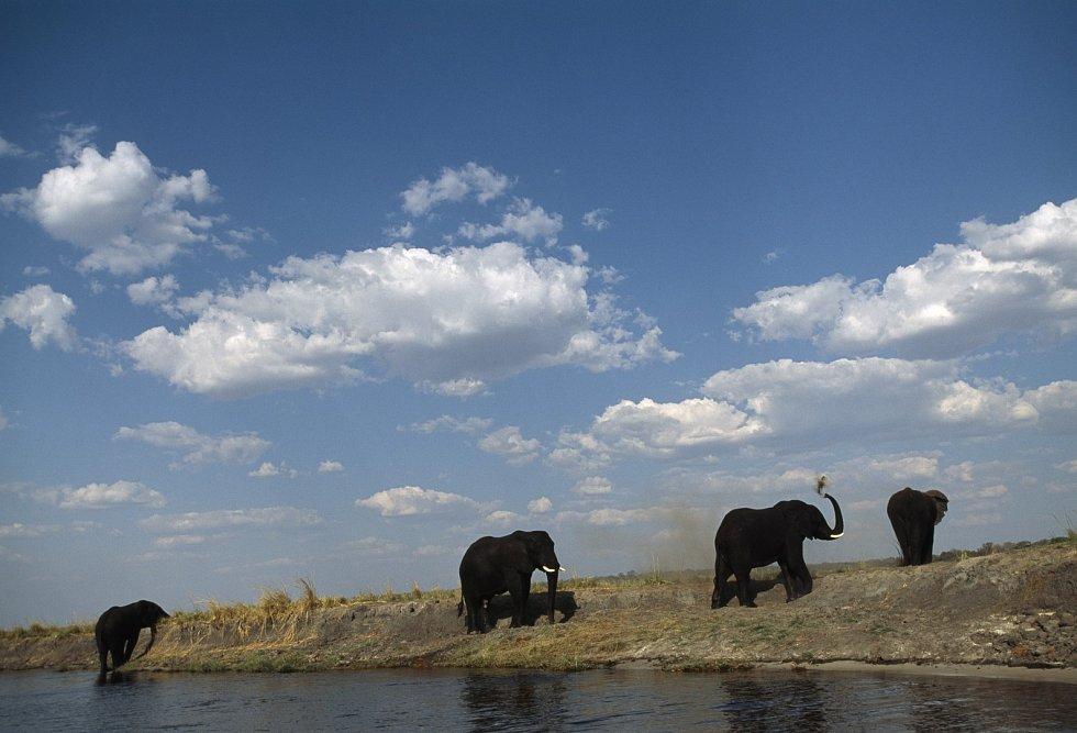 Sloni na břehu
