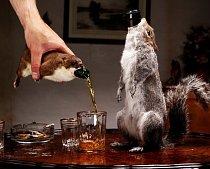 """Jedno ze skotských piv bylo označeno jako nejsilnější a nejdražší na světě i díky svému """"kožíšku""""."""
