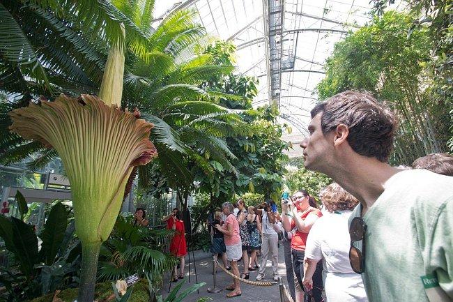 Červenec 2013: Davy lidí si nenechaly ujít pohled na květ v Národní botanické zahradě ve Washingtonu.