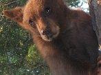Medvědi bojují o život