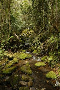 Kde neexistuje pěšina, je nejlépe se držet koryta potoka.