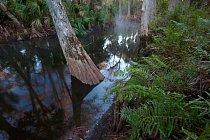 Jonathan Dickinson State Park na Floridě chrání 12,2 kilometru od roku 1985. FOTO: Michael Melford pro National Geographic
