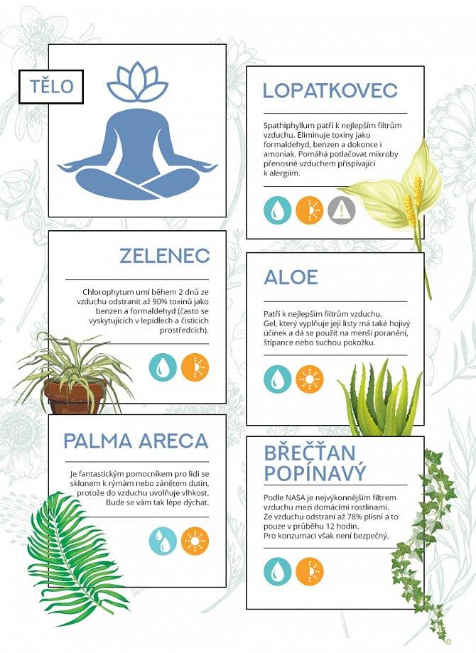 Superschopnosti rostlin a jejich vliv na tělo
