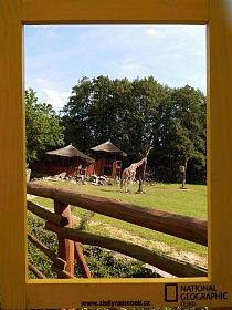 6. místo: Žirafa ve výběhu (Sára Bernovská)
