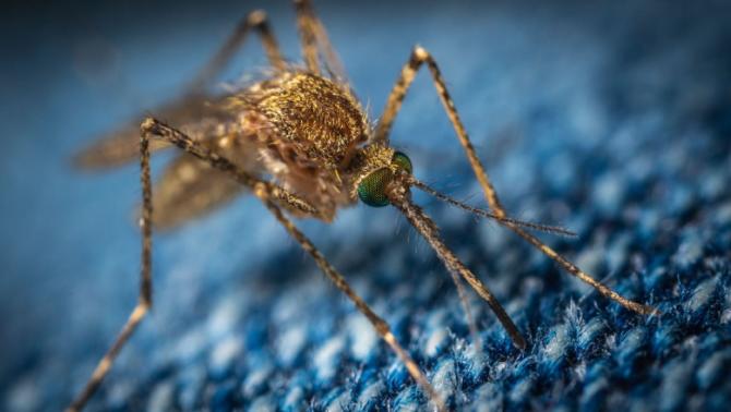 Komáři vám dokážou kempování pěkně znepříjemnit. Připravte se na ně!