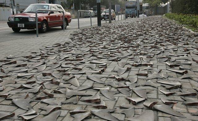 Žraločí ploutve se suší na chodníku