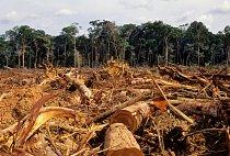 Odlesňování je největší hrozbou amazonského pralesa: ročně zmizí plocha o velikosti zhruba třetiny Česka.