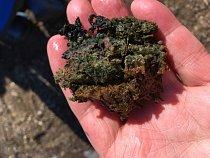 Charakteristická je velká vznášející se biomasa cyanobakterii na hladině, někdy koláče biomasy promrzají ledovým příkrovem.