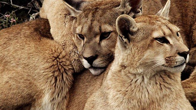 VIDEO: Nezkrocená Amerika vás uhrane fascinujícími záběry zvířat