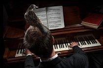 Arnie, špaček obecný žije s Lloydem a Rose Buckovými v Somersetu, kde štěbetá anglicky a je nejspokojenější, když Lloyd hraje na klavír. Zdá se, že v klasické hudbě je něco, co špačky přitahuje: Mozart měl doma jednoho, který zpíval některé jeho skladby.