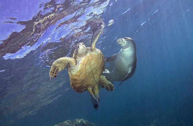Uklidnění objetím: Tuleň zachránil vyděšenou želvu