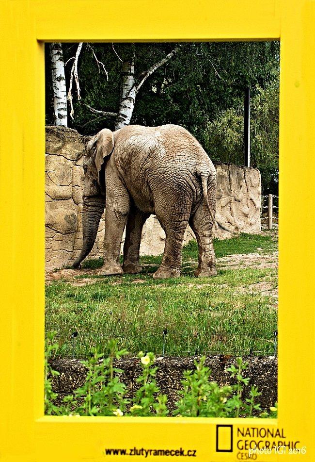 8. místo: Slon (Igor Bielický)