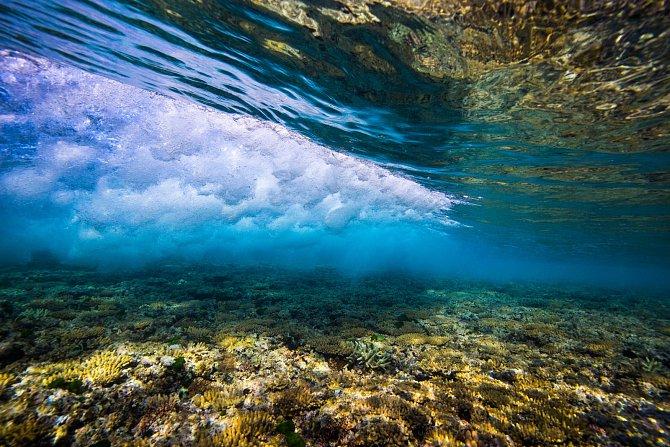 Vědecký výzkum na Velkém bariérovém útesu odhalí vprůměru 7nových druhů denně!