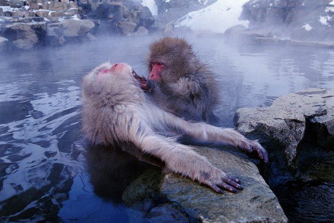 Před chladem makaky chrání výjimečně hustá srst.
