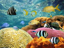 Naprostá většina oceánů je nějakým způsobem lidskou činností poškozena. Ne všude to vypadá tak jako na této fotografii.