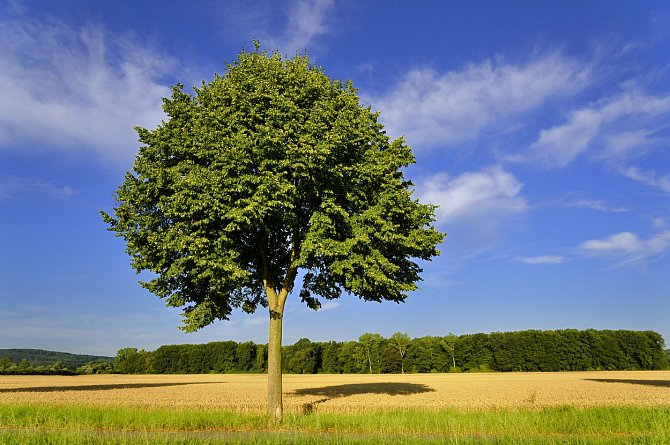Na planetě roste kolem 100 000 druhů stromů, z toho 8 000 druhů je ohroženo vyhynutím a téměř 1 000 je ve velmi kritickém stavu.