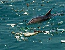 Delfín uprostřed plovoucích odpadků.