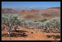 Hřeben pohoří Haghier na obzoru, v popředí stromovité pryšce