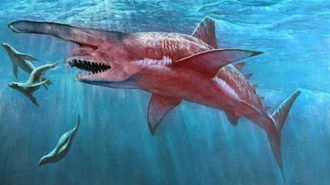 VIDEO: Nejzáhadnější tvorové mořských hlubin. Obří medúzy, gigantické ryby i žralok-šotek