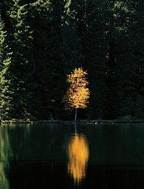 Na Plešném jezeře