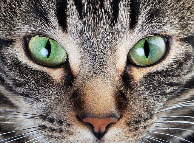 Kočka vidí nejlépe v šeru. Navíc hravě zvládne sledovat více pohybujících se objektů najednou, což z ní dělá dobrého lovce.