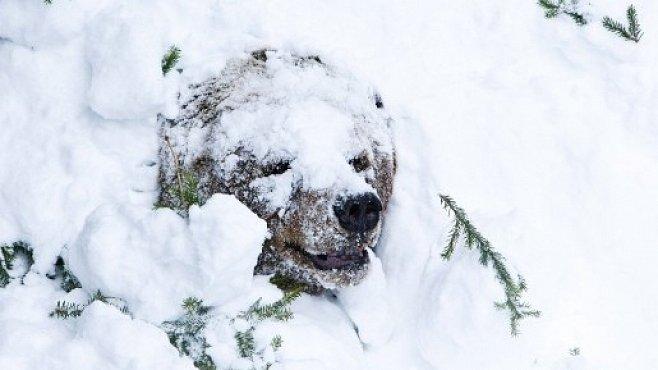 OBRAZEM: Medvěd probuzený ze zimního spánku jde nejdřív na malou