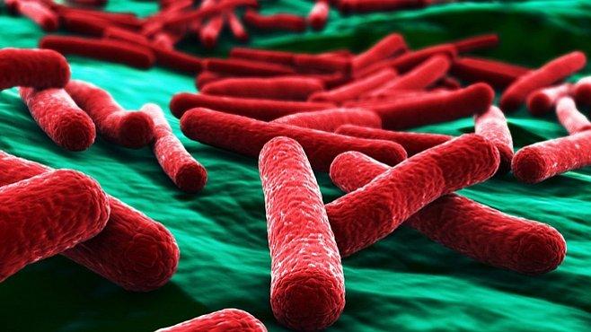 Inženýři nutí bakterie k produkci živé hmoty
