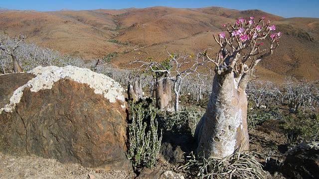 Vývoj rostlin zde probíhal v izolaci, podobně jako na Madagaskaru.