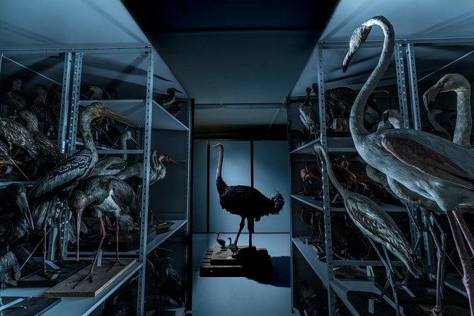 Ornitologická sbírka  zahrnuje více než 35 000 kůží ptáků a přes 1500 vajec.