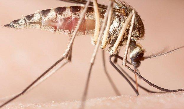 VIDEO: Takhle saje komár. Detaily, které si nepřipouštíte