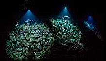 V téměř bezměsíčné noci u atolu Fakarava ve Francouzské Polynésiii plavou členové týmu Laurenta Ballesty proti přílivové vlně a drží výkonné svítilny, aby vyfotili žraloky lovící kanice ukryté v korálech.