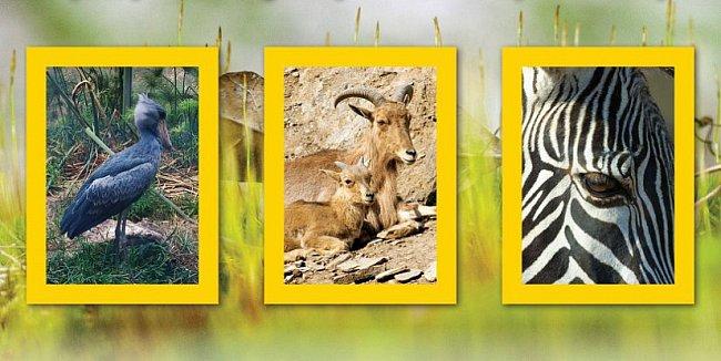 Soutěž Svět za žlutým rámečkem odměňuje nejlepší snímky.