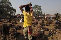 Účastníci věří, že je díky zvířecí oběti bohyně Gadhimai ochrání před zlem a vyslyší jejich přání.