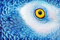 Papoušci mají velmi dobrý zrak. Vnímají 150 jednotlivých obrazů za vteřinu, zatímco člověk jen 16. Díky boční poloze očí na hlavě mají široký výhled a včas vidí i nepřátelé, kteří se k nim blíží zezadu.