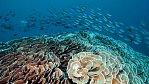 Exkluzivně pro NG: Tajemné hory na dně oceánu skrývají na svých svazích pozoruhodný život