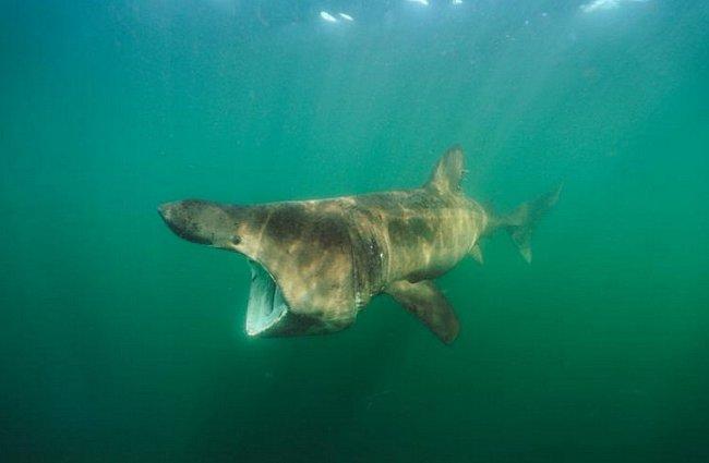 Cape Cod, Massachusetts: Žralok veliký