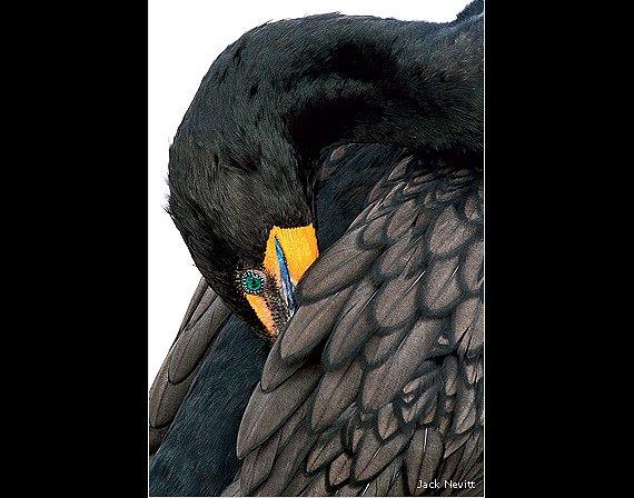 1. místo, kategorie Ptáci