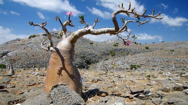 Pohádkový ostrov Sokotra: Bizarní flora a skutečná, nedotčená příroda