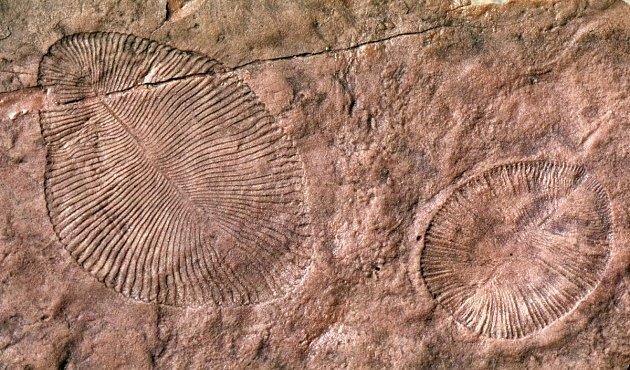 Život nevzešel z moře na souš, ale naopak, tvrdí geolog