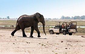 Sloni jsou největší chloubou Národního parku Chobe.