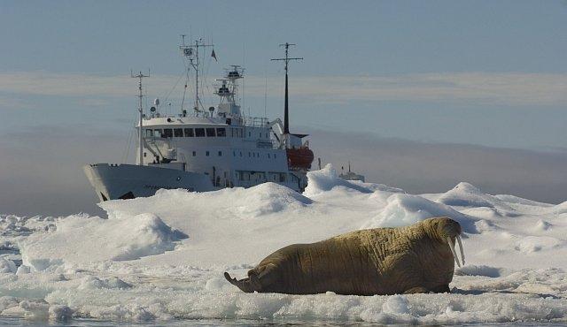 Stane se Česko arktickou velmocí? Polární ekologové tam hledají budoucnost