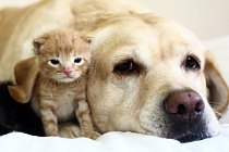 kitten with dog
