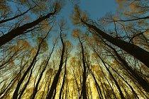 Velké a staré stromy jsou klíčové pro fungování okolního ekosystému, a tím i pro životní prostředí Země jako takové.
