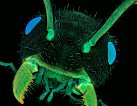 Nejlepší fotografie mikrosvěta: mravenec, rakovina a další