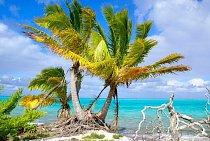 Ostrov Ooeno je stejně jako ostatní pozoruhodný svou florou - mnoho rostlin je endemických.