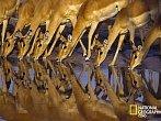 Vernisáž výstavy fotografií National Geographic