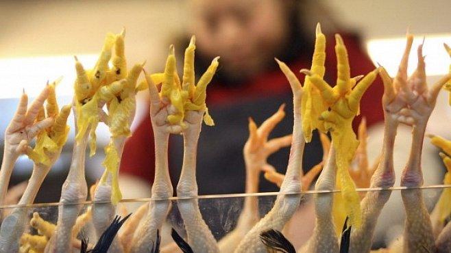 Ptačí chřipka v rukou teroristů? Americké vládě to nahání hrůzu