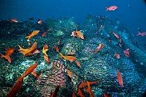 Odhozená vlečná síť zakrývá část podmořské hory El Bajo v mexickém Kalifornském zálivu a ničí korály. Nadměrný rybolov vyčerpal kdysi bohatý ekosystém na této podmořské hoře i na dalších podobných hor